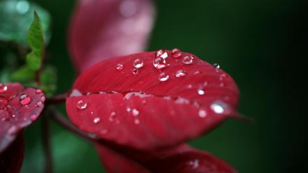 Close-up nature flowers leaves plants water drops macro wallpaper