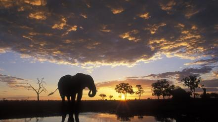 Elephant Silhouetted wallpaper