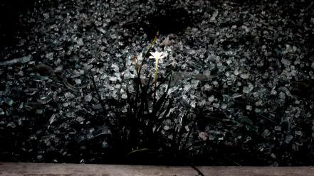Nature black white flowers crystals flor wallpaper