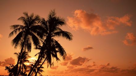 Palms and sunset Wallpaper