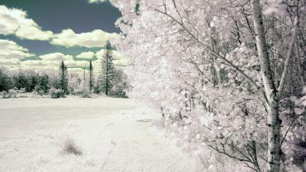 Landscapes nature trees snow wallpaper