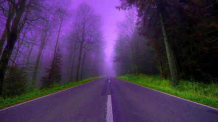 Nature trees purple fog woods roads way Wallpaper