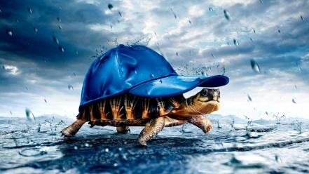 Animals baseball caps tortoises wallpaper