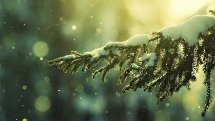 Nature pine trees snow wallpaper