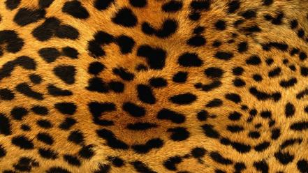 Animals fur leopard print patterns wallpaper