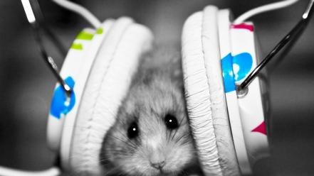 Colors funny hamsters headphones mice wallpaper
