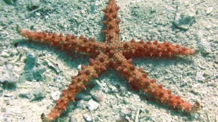 Albania ocean sealife starfish stars wallpaper