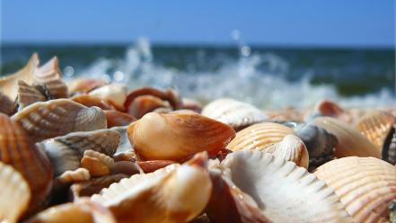 Beaches nature ocean sea seashells wallpaper
