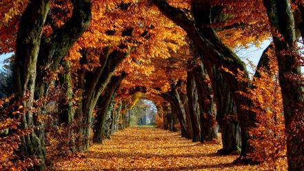 Brown fallen leaves falls narrow wallpaper
