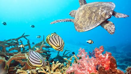 Fish nature sea turtles underwater Wallpaper
