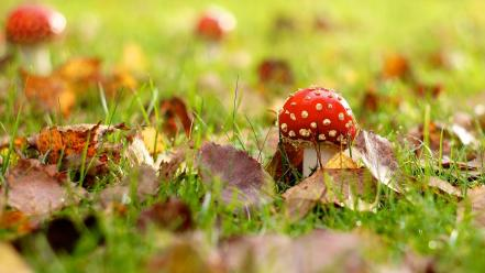Fallen leaves mushrooms nature wallpaper