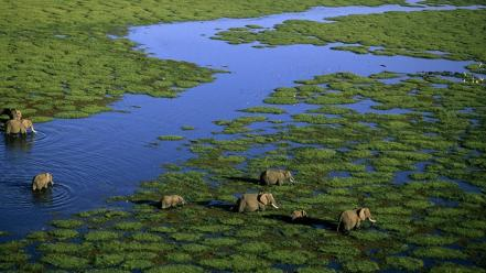 Kenya aerial view animals elephants marsh wallpaper