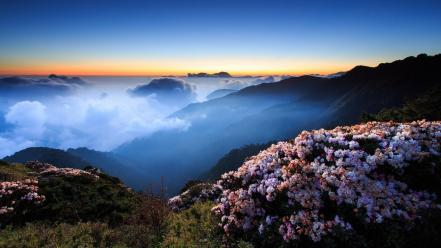 Taiwan clouds flowers fog hills wallpaper