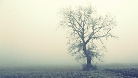 Abandoned fog lonely trees wallpaper
