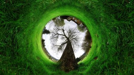 Fisheye circle grass panorama trees wallpaper