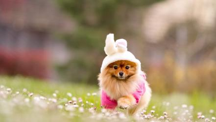 Cosplay animals dogs pets wallpaper