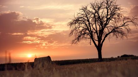 Landscapes nature trees germany fields wheat skies wallpaper