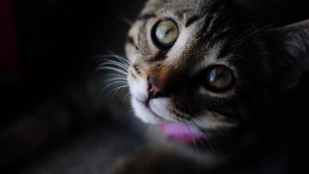 Animals cats green eyes pets wallpaper