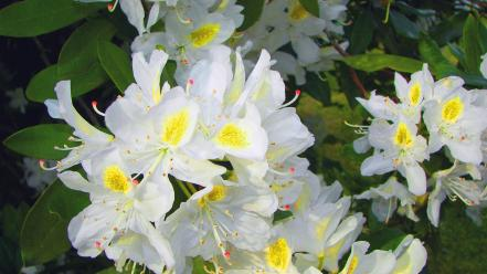 Flowers plants white wallpaper