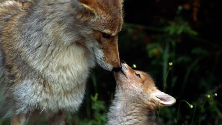Animals baby foxes nature Wallpaper