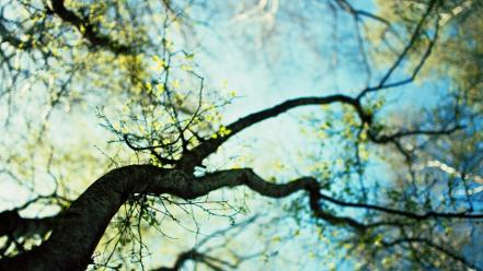 Blurred branches depth of field macro nature Wallpaper