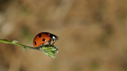 Animals depth of field insects ladybirds nature wallpaper