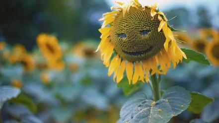Flowers funny nature smiley sunflowers wallpaper