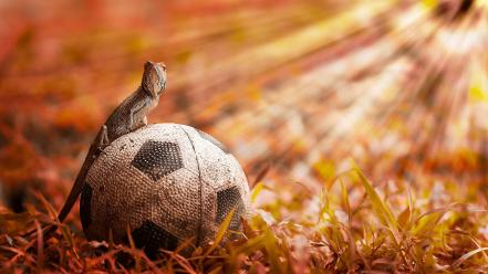 Grass reptiles soccer wallpaper