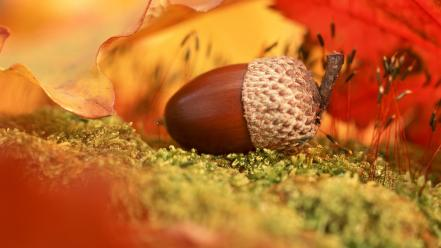 Leaves nuts acorns macro wallpaper