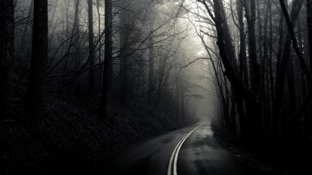 Dark forest mist roads wallpaper