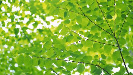 Green nature leaves wallpaper