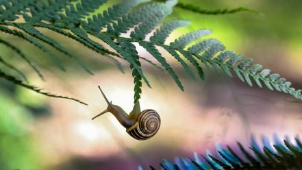 Nature leaves snails ferns branches blurred background wallpaper