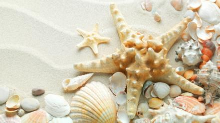 Sand shells starfish Wallpaper