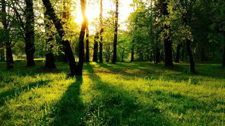 Landscapes nature trees grass shadows sunlight wallpaper