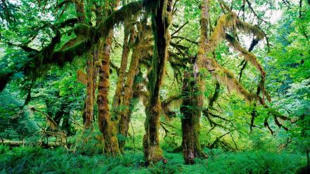 Landscapes rain forest national park washington vines wallpaper