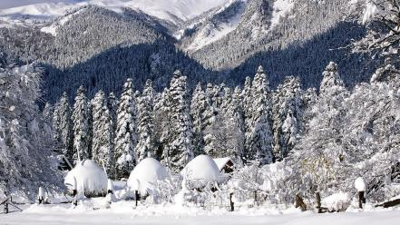 Mountains winter snow trees forest wallpaper