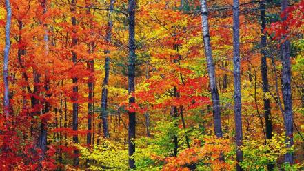 Nature colors new hampshire wallpaper