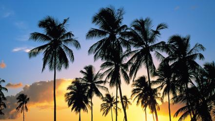 Nature paradise palm trees lucia wallpaper