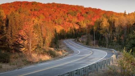 Nature trees autumn (season) forest roads way Wallpaper