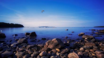 Blue ocean landscapes nature canada seagulls sea wallpaper