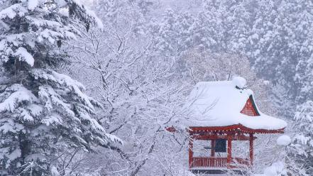 Japan winter forest wallpaper