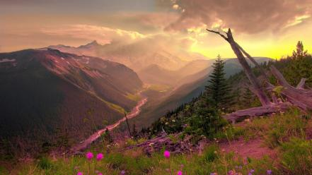 Clouds nature sun trees flowers pink wildflowers wallpaper