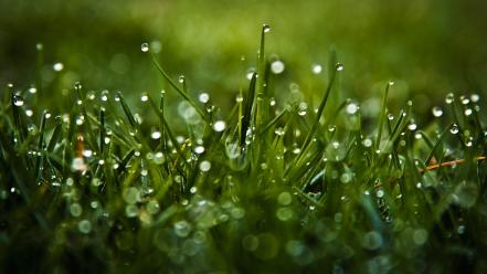 Green nature grass water drops macro dew wallpaper