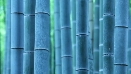 Landscapes nature bamboo wallpaper