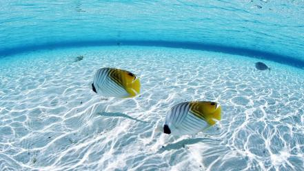 Ocean fish seascapes wallpaper
