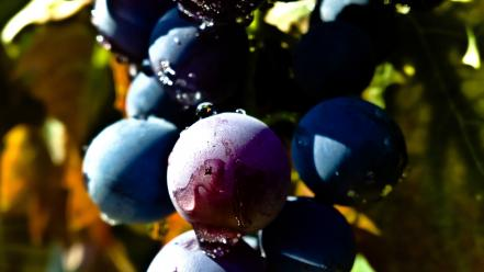 Nature fruits leaves wet grapes Wallpaper