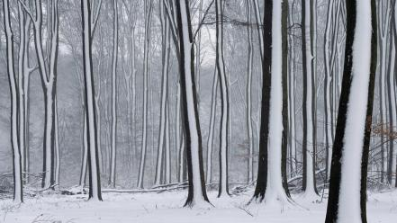 Nature winter snow forest the netherlands gelderland covered wallpaper