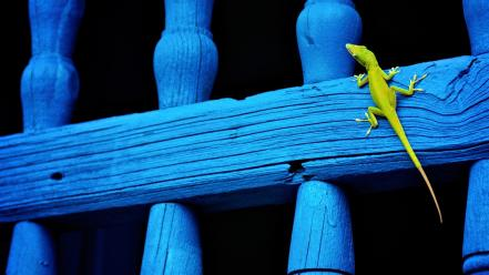 Balcony national geographic lizards reptiles wallpaper