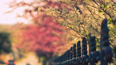 Flowers fences bokeh depth of field flowered wallpaper