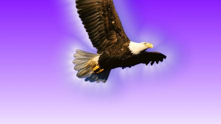 Flying wall hawk Wallpaper